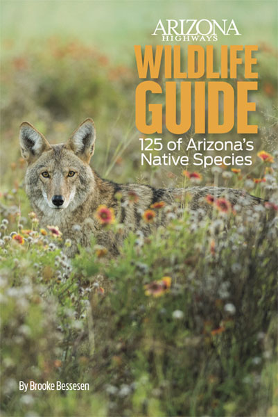 Wildlife Guide: 125 of Arizona's Native Species