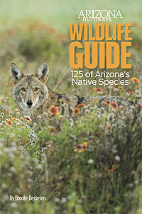 Wildlife Guide: 125 of Arizona's Native Species