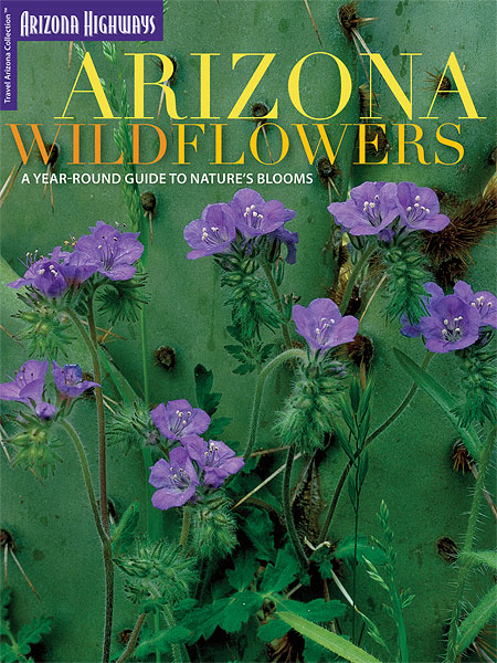 Arizona Wildflowers: A Year-Round Guide To Nature's Blooms