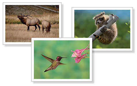 Wildlife Note Cards