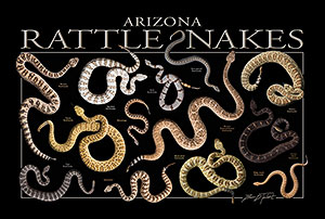 Arizona Rattlesnakes Poster