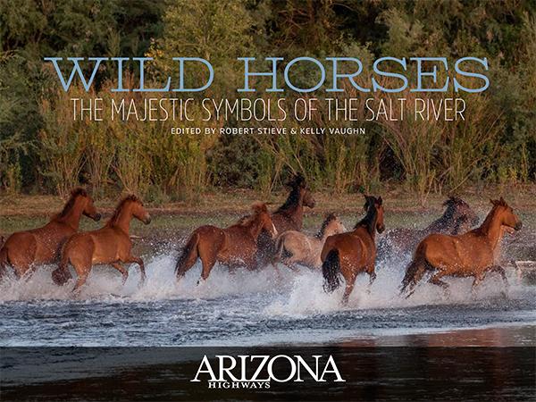Wild Horses of the Salt River